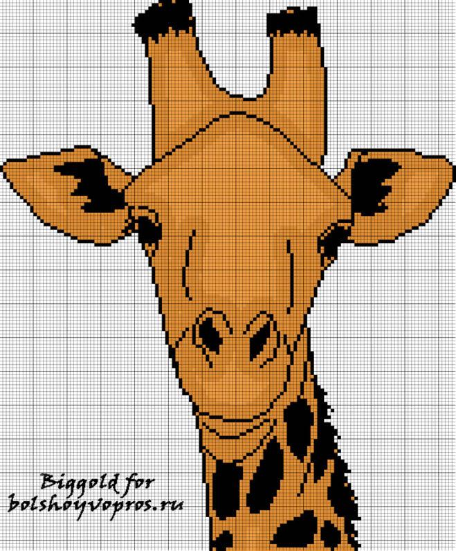 схем вышивки жирафа,