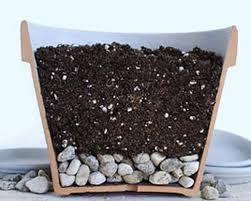Как спасти растение от перелива?</p> <p> Что делать, если залили цветы?»></p></div> <p></p> <h2><span id=
