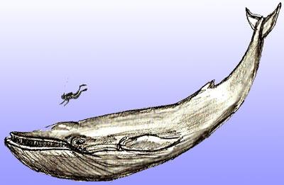 рисовать кита 5