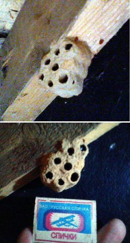 Molbiol ru -> Осиные гнезда