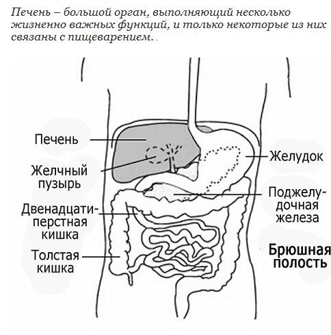 область живота) справа под
