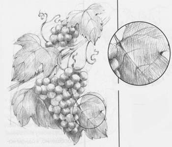 нарисовать виноградную лозу