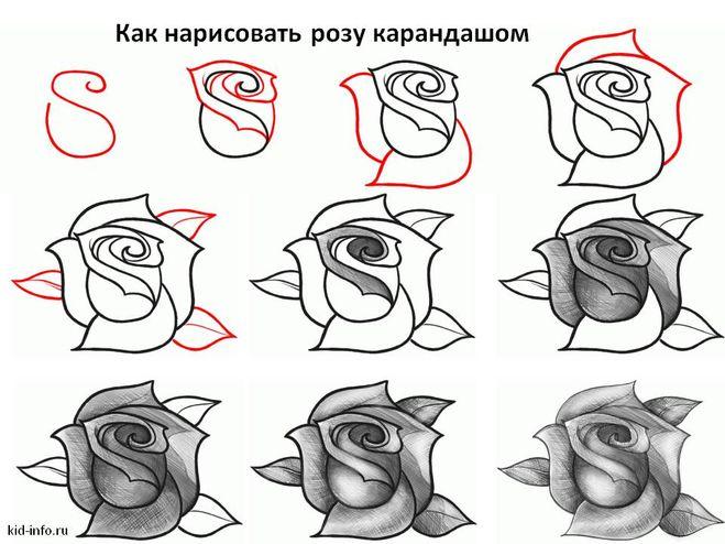 рисованию розы карандашом.