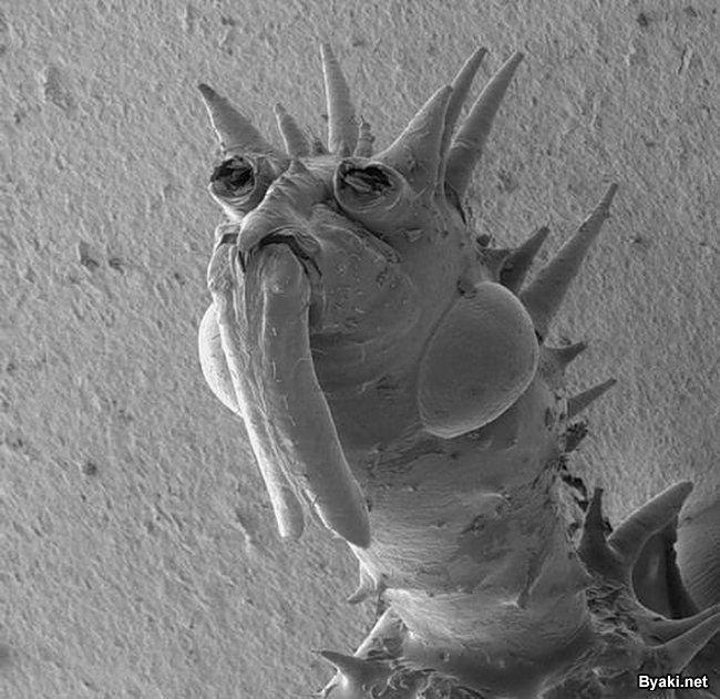 Как выглядят микробы под микроскопом