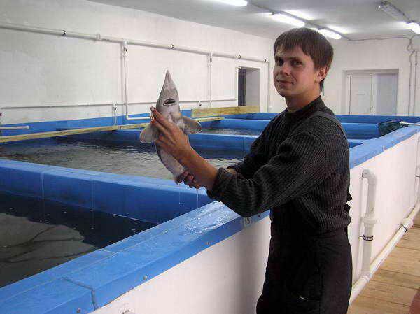 Видео по разведению рыбы в домашних условиях