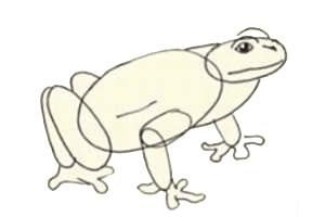 как нарисовать лягушку 2