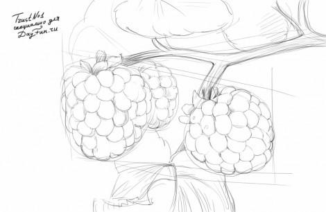как нарисовать малину карандашом поэтапно