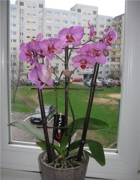 полив орхидеи весной