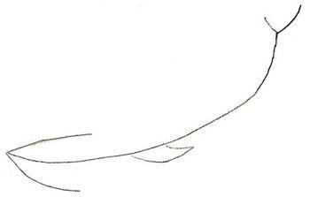 рисовать кита 1