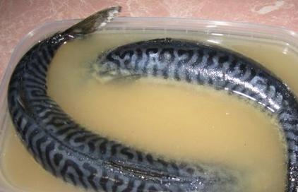 Как сделать горчицу из порошка на рассоле в домашних условиях
