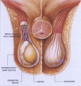 яйца картинки мужские