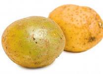 Почему картошка зеленеет на солнце