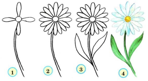 Как нарисовать ромашку поэтапно