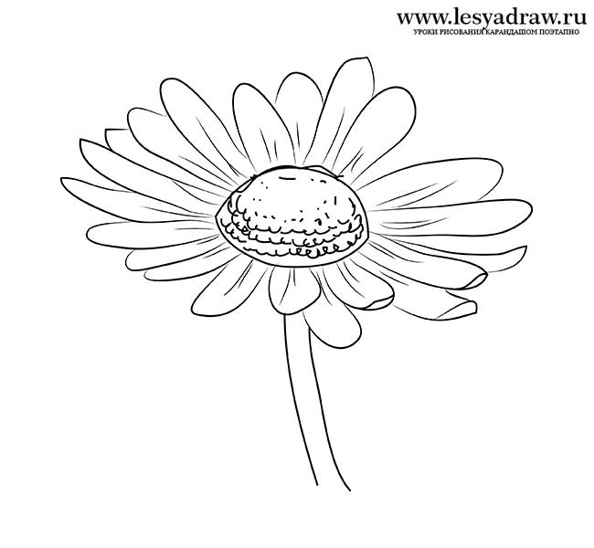Как нарисовать ромашку карандашом поэтапно
