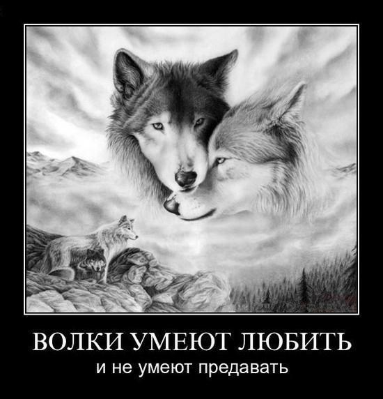 один знакомый волк текст