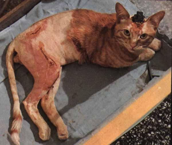 Тест косметики на животных