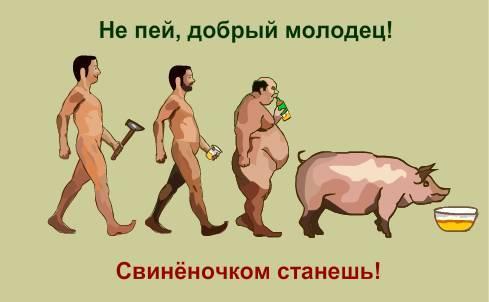 свинья курит фото