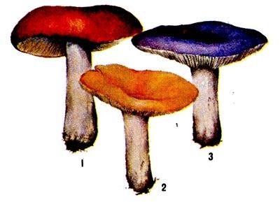 Синие как грибы