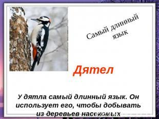 кaкaя птицa нaшей полосы сaмaя быстрaя