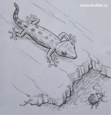 нарисовать ящерицу карандашом
