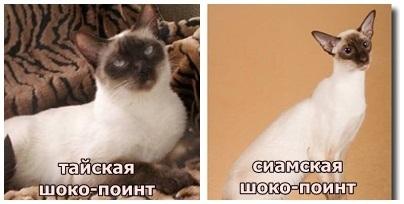 Милый старый Петербург Воспоминания о быте старого