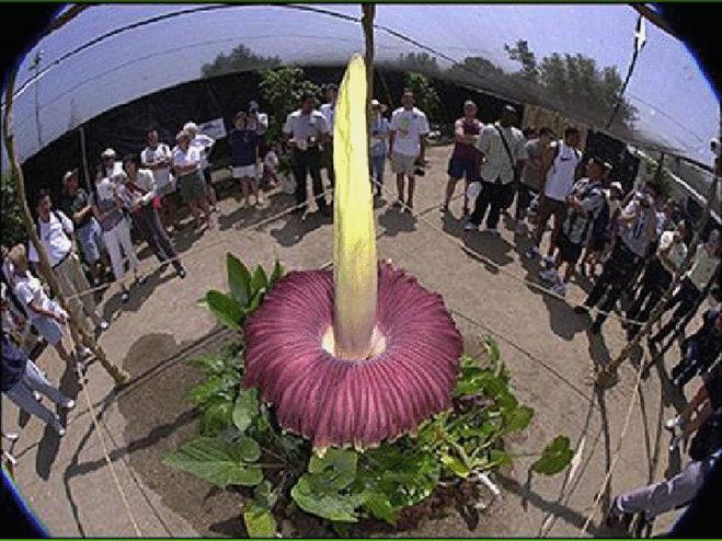 Смотреть самых больших цветков