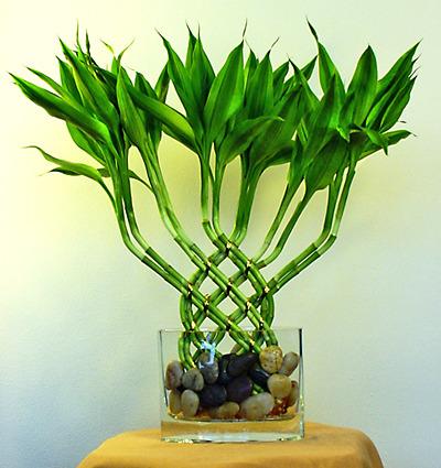 Почему желтеют листья у бамбука в домашних условиях - Automee-s.ru