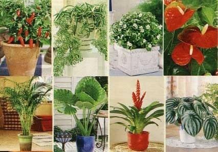 Комнатные растения лунный календарь