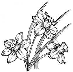 Цветы картинки рисовать