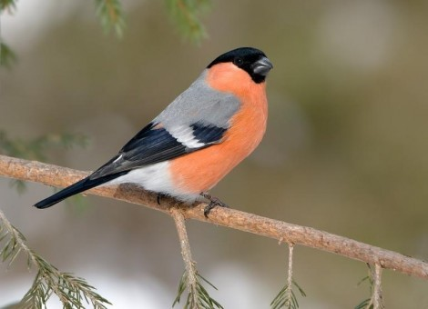 Птицами фото поэтапно