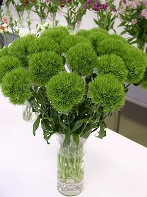 Цветок зелёного цвета фото