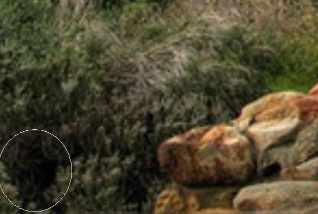 Московский Камерный Хор - Evgeny Nesterenko Евгений Нестеренко Русская И Болгарская Духовная Хоровая Музыка · Russian And Bulgarian Sacred Choral Music