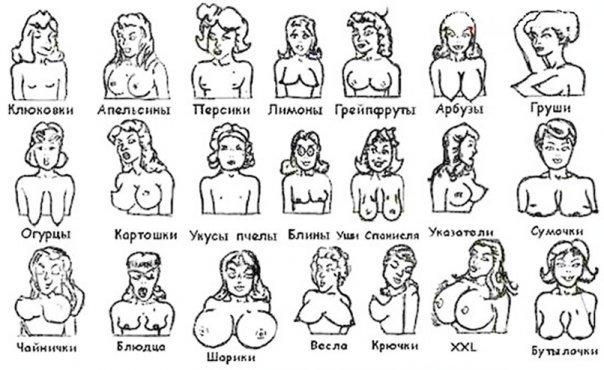 картинки формы женских сисек