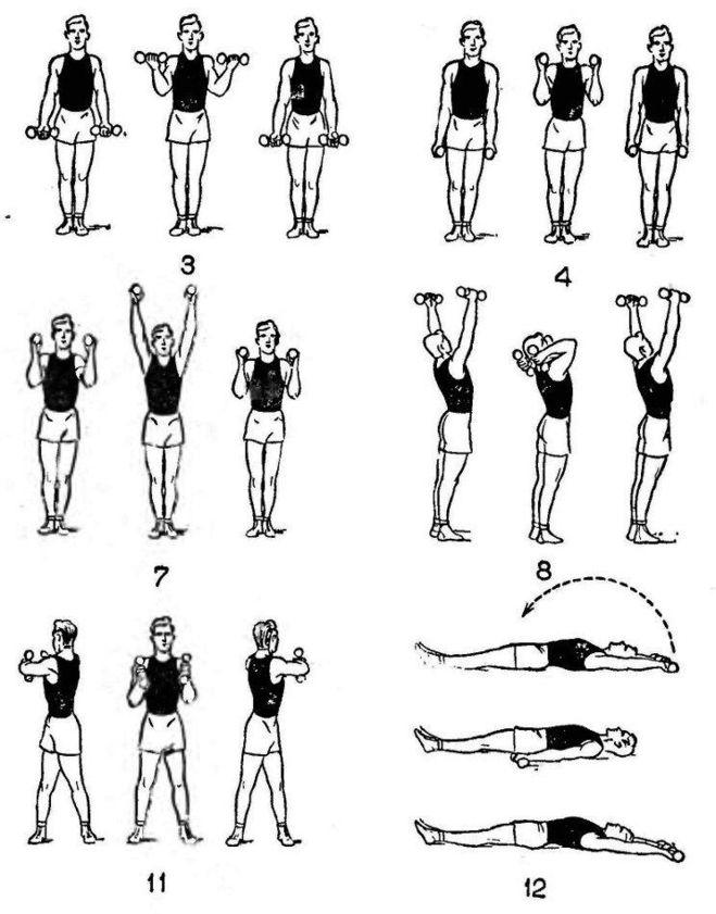 Комплекс упражнений с гантелями в домашних условиях с картинками 5