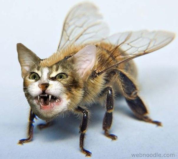 мух не ловит