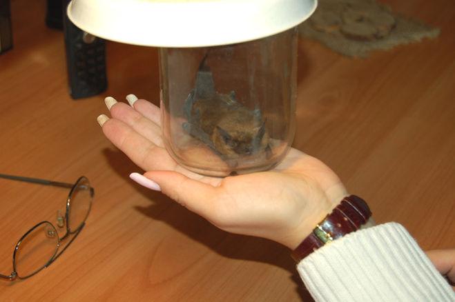 поймать летучую мышь