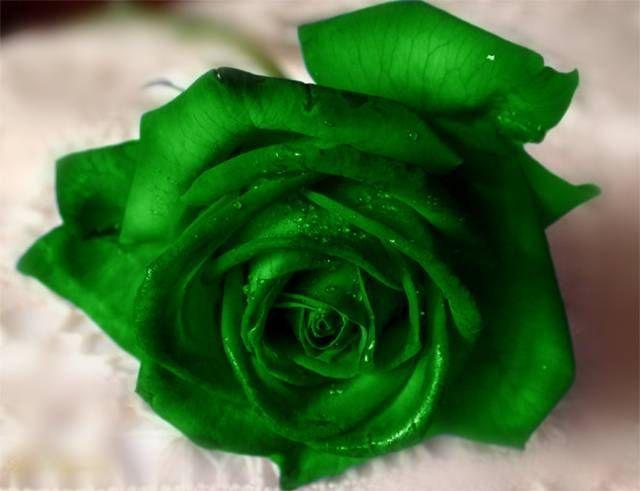 Фото зеленые цветы