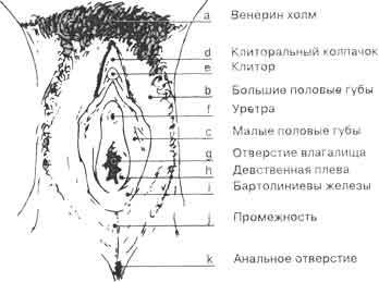 Фото самые длинные половые губы уженщин фото 53-926