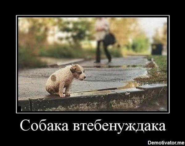 Утро собаки