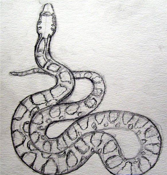 рисуем змею 3