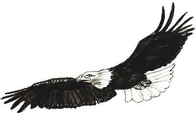 рисовать орла 6