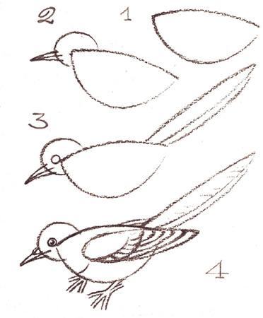 нарисовать птицу