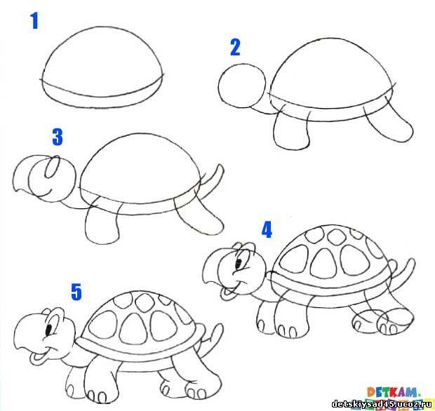 Рисунок схема черепахи